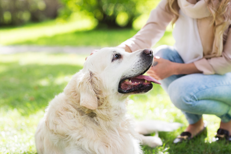 how to include a pet in your estate plan