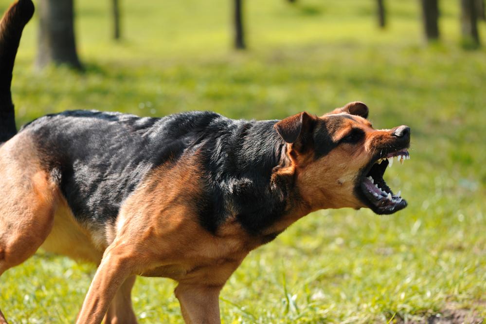 dog bite child injury kansas city lawyer.jpg