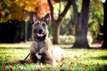 An attorney can explain your dog bite claim options. Rosenberg Law Firm