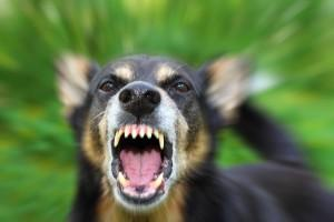 Barking dog showing teeth
