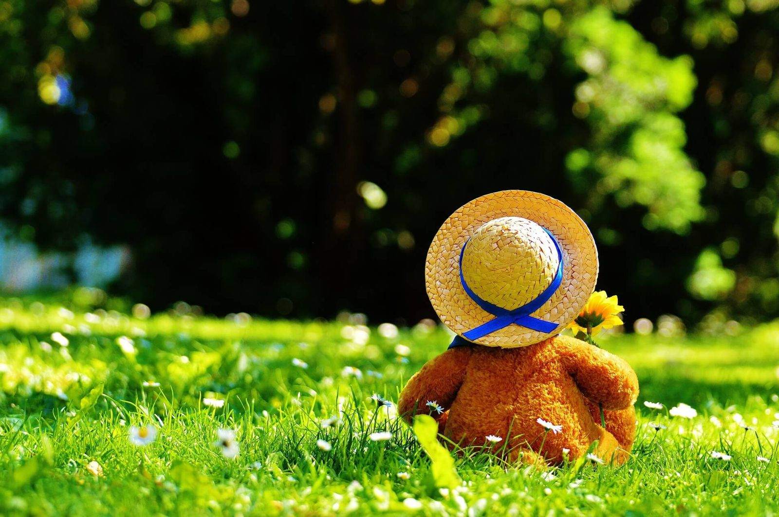 Guardianship for Children Teddy Bear