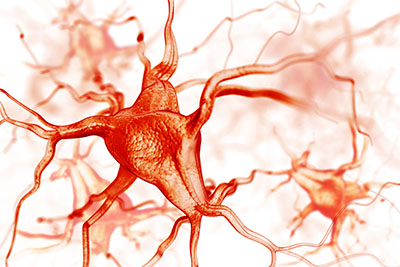 Nerve endings and blood vessels