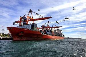 Sea birds fly around a container ship docked at port