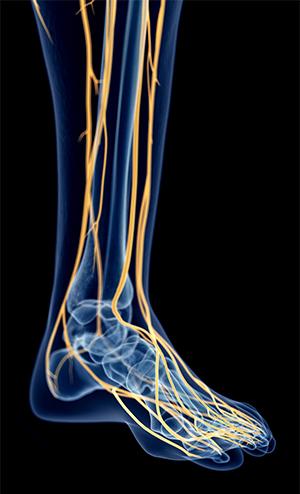 Diagram of nerves in foot