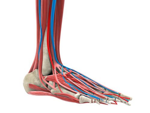 The anatomy of your foot is complex, leaving room for injuries.