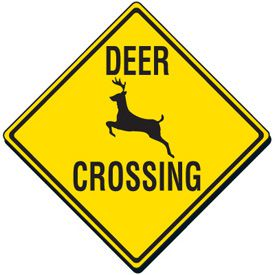 Michigan deer car accident lawyer
