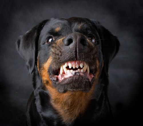michigan dog bite lawyers and settlements