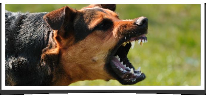 Westland Dog Bite Lawyer