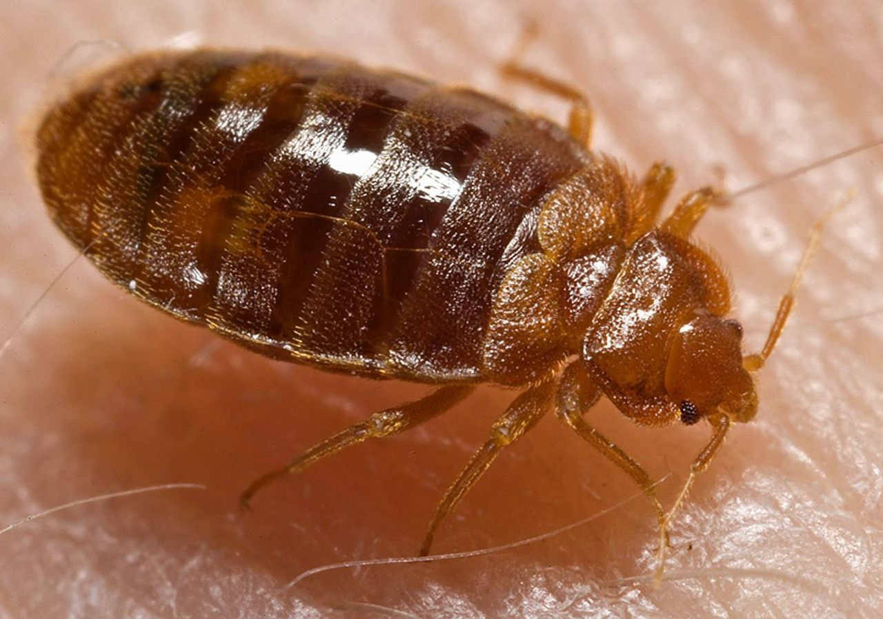 Michigan Bed Bug Claims