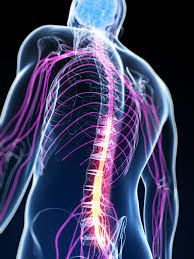 michigan spinal cord injury settlements