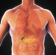 pancreas_anatomy