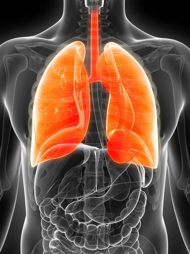 X-ray of a Body Showing Lungs Highlighted in Orange