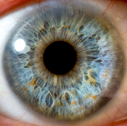 A Close-Up View of a Blue Eye