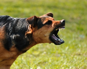 There May Be Lasting Psychological Effects After a Dog Attack