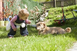 Child Approaching a Small Aggressive Dog in a Yard