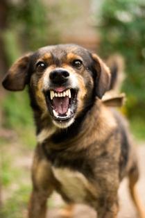 Dog Bite Defense Attorney California