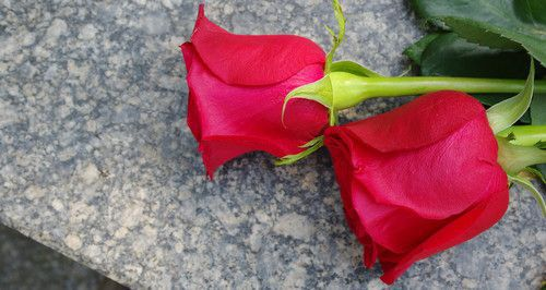 Roses on Wrongful Death Tomb Stone
