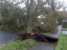 Hurricane Sandy sidewalk damage