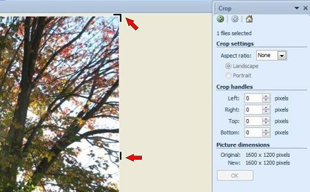 Look for the crop handles to control the image size