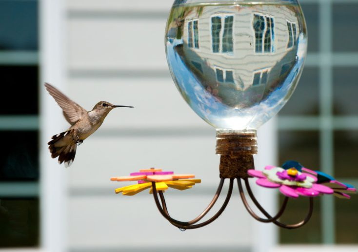 Google's Hummingbird Feeder