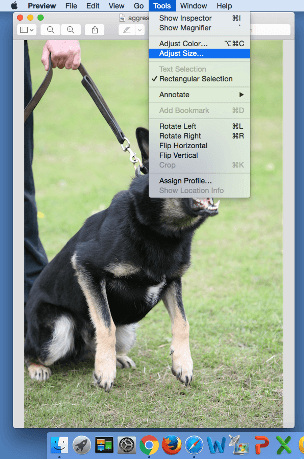 Image Editor Preview Screenshot