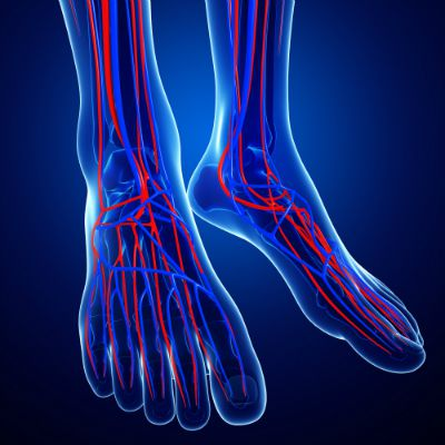 Circulatory system in feet