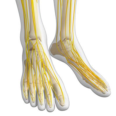 calcaneal nerve entrapment diagram