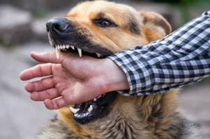 dog attack injuries to children