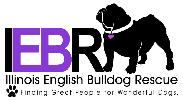 Support for the Illinois English Bulldog Rescue
