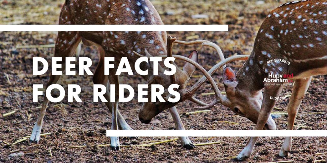Deer Facts For Riders