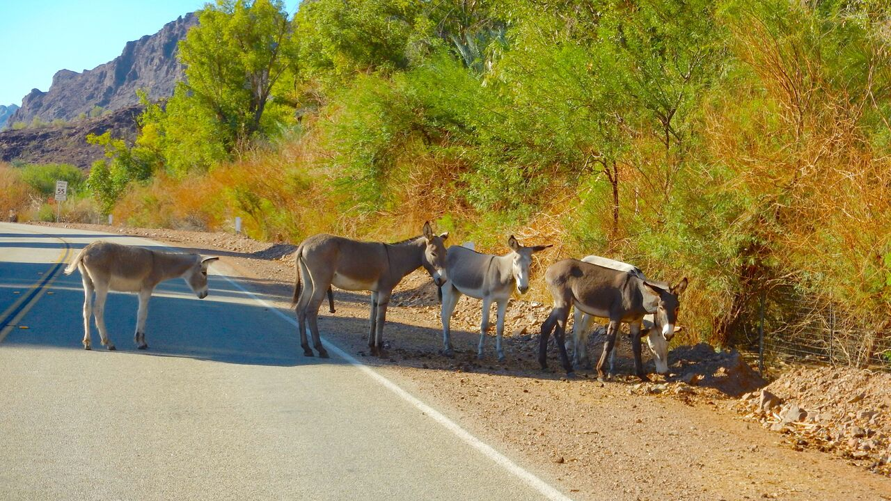 5 donkeys on the side of the road