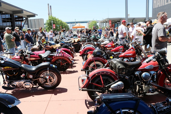 two rows of motorcycles