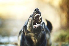 There is no formula that will calculate a fair recovery for a dog attack