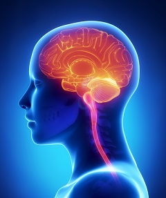 Misused drugs and other chemicals can cause grave damage to the brain