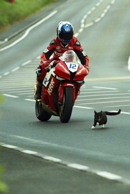 Motorcycle racer avoiding cat on racetrack