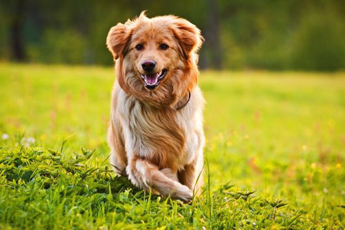 Dog bites are common and can also lead to serious infection. Read on to know the warning signs from your Milwaukee dog bite attorney.