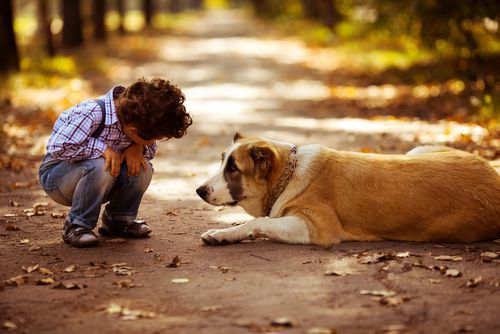 Your Milwaukee dog bite laywers know that a dog bite to a child can be especially traumatizing. Many treatments may follow, read to find out what they are.