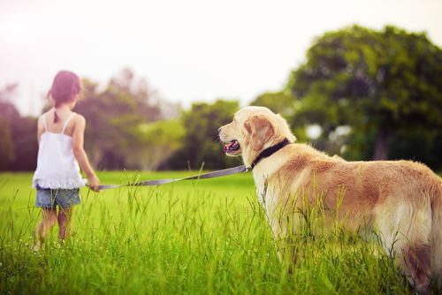 Protect your child from a possible dog bite from your own family pet from our Milwaukee dog bite lawyers.