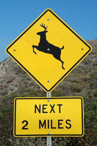 Avoid causing a collision in Wisconsin with a deer by driving cautiously and using highbeams if there is no oncoming traffic.