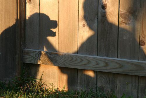 Dogs shadow in backyard