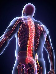 Spinal cord damage can permanently impair the use of your limbs