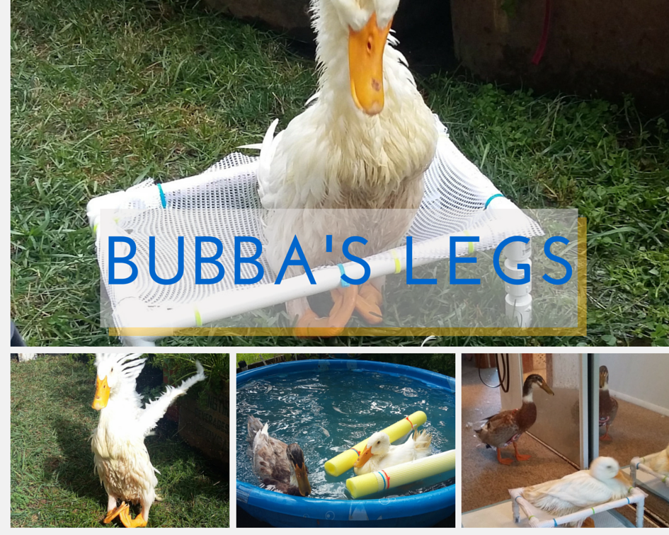 Bubba the duck
