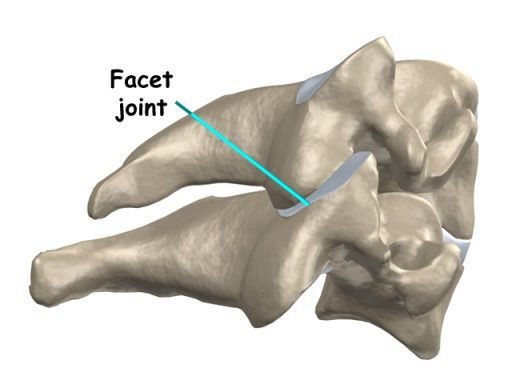Cervical Facet Joint