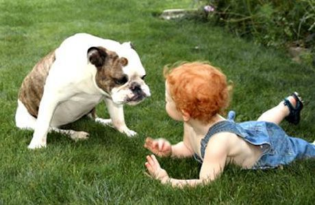 children and dog safety issues