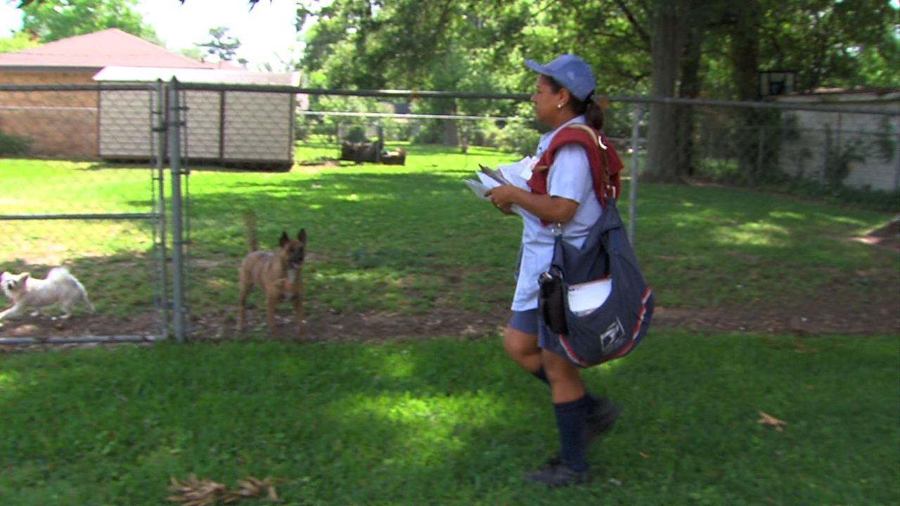 Mail Carrier Dog Attacks