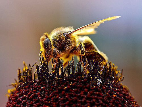 Honeybees are dying off. Could safety regulations for semi trucks be next?
