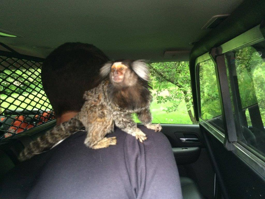 monkey on man's shoulder
