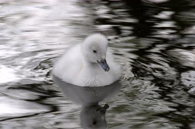 A sitting duck