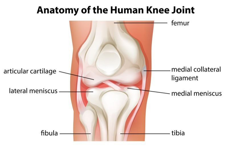 Knee Injuries Suffered in Car Accidents | Mahaney & Pappas, LLP
