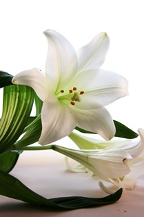funeral_lilies